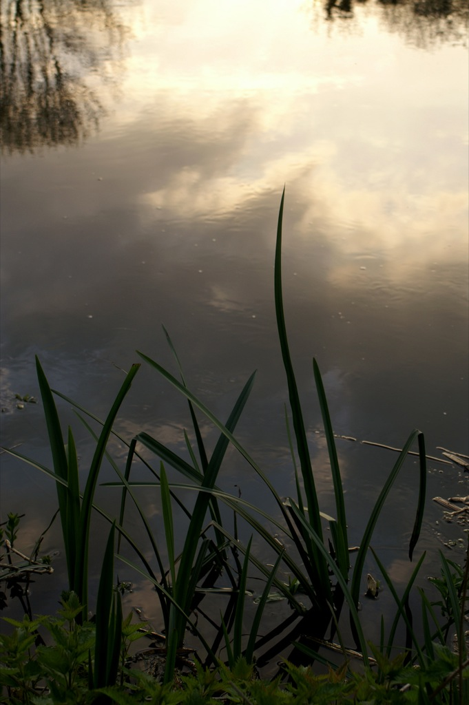 Itchen reflections