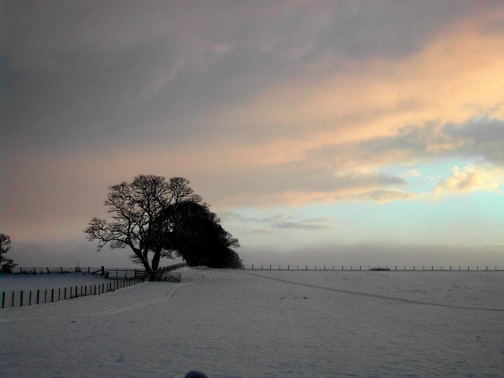 Snow near Oakwood