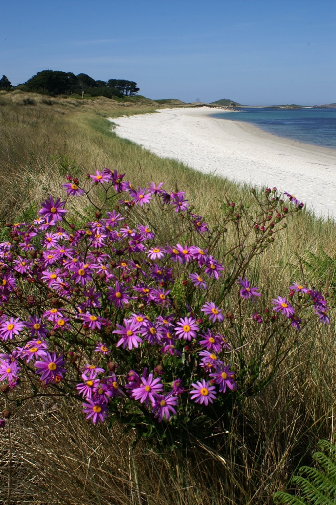 Pentle Bay, Tresco, Isles of Scilly