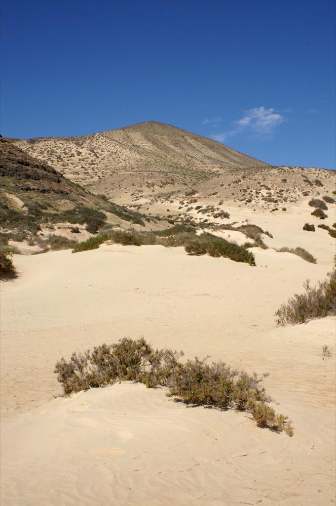 Dune landscape, Fuerteventura