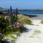 East Coast Tresco, Isles of Scilly